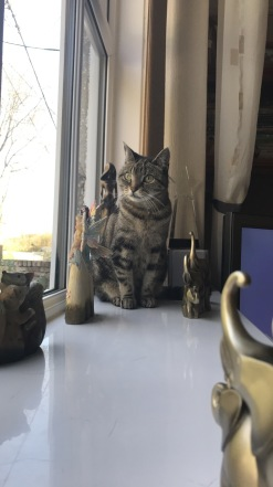 Our family cat